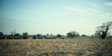 The mud-walled village in Mali, near the town of Diabaly, surrounded by fields and baobabs.
