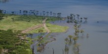 Rising water levels submerge trees and encroach on land