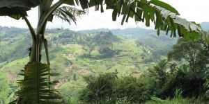 Large-scale international investments in Cameroon have highlighted the importance of protecting the land rights of rural people (Photo: World Agroforestry Centre, Creative Commons via Flickr)