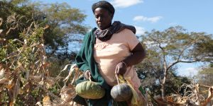 Smallholder farmer with pumpkins she harvested in her maize field in Chongwe, Zambia (Photo: Tsvangirayi Mukwazhi)