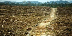 Rainforest logged to make way for palm oil plantations in West Kalimantan, Indonesia. Deforestation for agribusiness is destroying habitats and the ecosystems upon which local communities depend (Photo: David Gilbert/RAN, Creative Commons via Flickr)