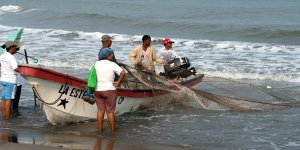 Fishermen hauling in a net
