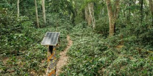 Woman carries a solar panel and walks through a forest