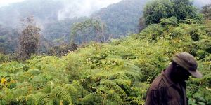 Tracking Gorillas in Bwindi Impenetrable Forest, Uganda. Photo: YouTuT