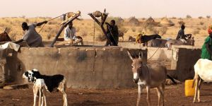 Pastoralists draw water from a well in Niger.