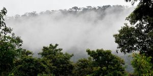 Lush forests in Ghana – one of the focus countries where REDD+ is relatively new. Photo: Neil Palmer (CIAT)