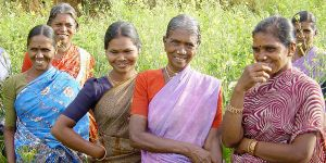 Members of a Indian women's group in a field of Finger Millet. Photo: Bioversity International.