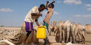 Pastoralists pull water from a well near Denan in the Somali Region of Ethiopia for their camels.