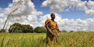 A small-scale farmer in Tanzania. Insecure rights and weak land governance are major challenges to ensuring that local landholders benefit from agricultural investments (Photo: Alun McDonald/Oxfam)