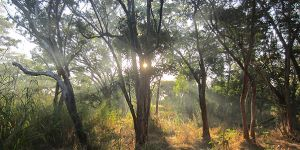 Miombo woodlands in Southeast Tanzania. But can remote sensing technologies accurately detect the woodlands (Photo: Samuel Bowers)