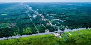 Aerial footage of palm oil plantations alongside a river