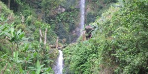 A scenic shot of forest with two waterfalls
