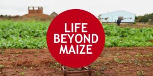 Title screen of the Life beyond maize film