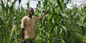 A Zambian farmer in his maize field. The overdependence on maize is having a negative impact on diets in Zambia (Photo: Wesley Wakunuma)