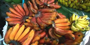 red bananas - creative commons