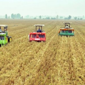 Combine harvesters in a wheat field