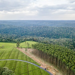 Landscape of fields and forest