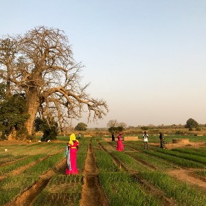 People walking on agricultural land