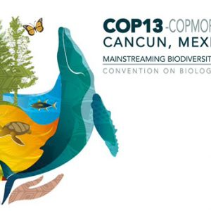 The CBD COP13 logo. IIED and partners will be at the Convention on Biological Diversity conference in Cancun, Mexico, in December