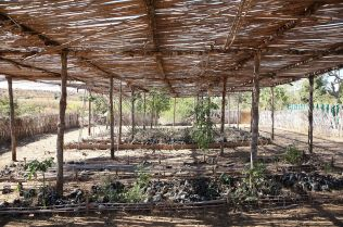 A reforesting project develops into a successful tree nursery