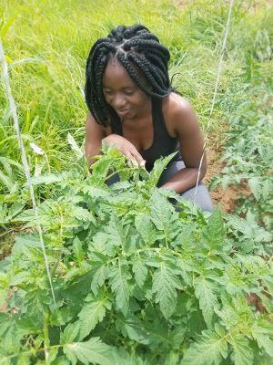 A young farmer inspecting crops (Photo: Tamara Kaunda)