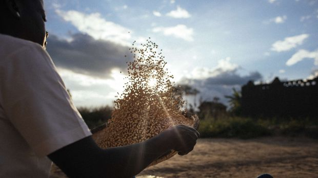 Bester Glandson was lent land and taught to grow soy and groundnuts with support from the National Smallholder Farmers' Association of Malawi (NASFAM) (Photo: Olivier Girard/EIF, Creative Commons via Flickr)