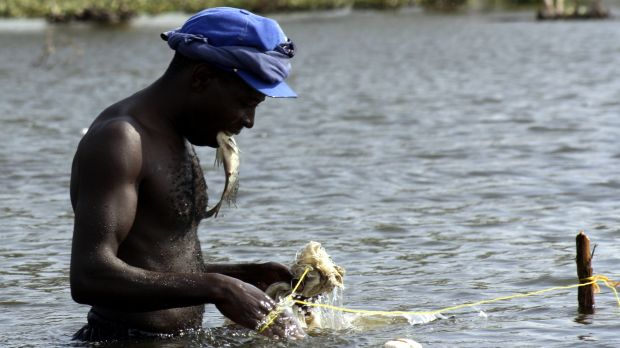 Fishingin Kenya's Lake Naivasha provides income for local people, but fish stocks have declined sharply due to over-fishing and the diversion of water for agriculture (Photo: Cheryl Q, Creative Commons via Flicker)