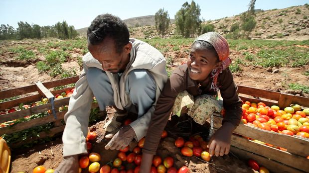 A government scheme to employ people to build water management infrastructure has supported Ethiopian smallholders and saved water for growing crops. (Photo: Stephan Bachenheimer / World Bank)