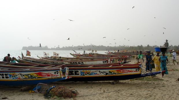 Fisheries account for 12 per cent of The Gambia's GDP. The country's Atlantic coastline and the mangroves along the River Gambia estuary are vulnerable to climate change (Photo: Javier D. Creative Commons via Flickr)