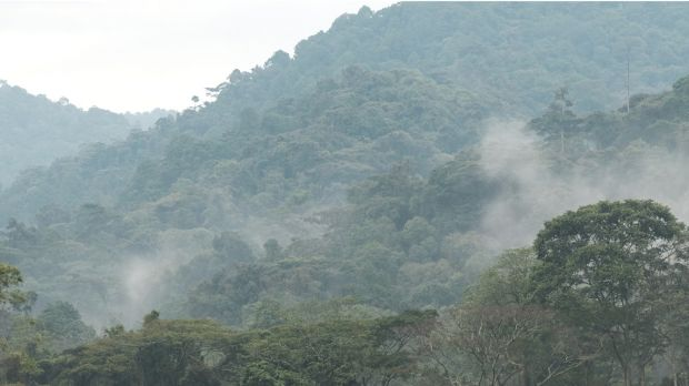 Mist over the Bwindi Impenetrable National Park in Uganda (Photo: Brian Harries, Creative Commons, via Flickr)