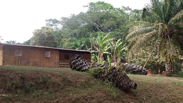 A farmers' house in Bandevouri, South Region, Cameroon. Bandevouri is one of several locations where the Centre for Environment and Development seconded a law graduate to assist rural people in legal matters (Photo: Thierry Berger)