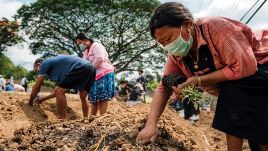 People planting vegetables and trees.