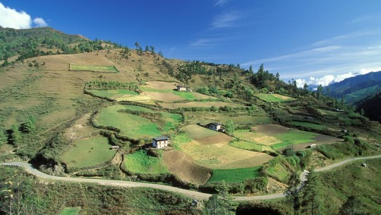 Landscape of terrace fields and homes