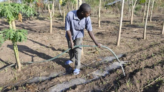 A Kenyan smallholder waters plants on his mixed farm where he is growing fruit trees and crops (Photo: V. Atakos/CCAFS, Creative Commons via Flickr)