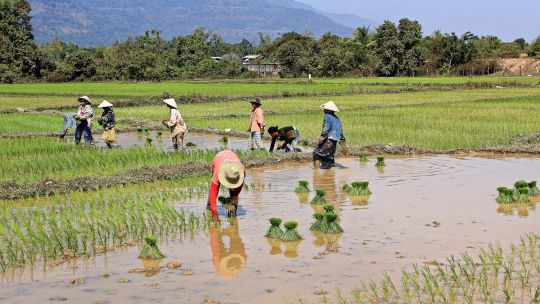 Laos is heavily dependent on traditional agriculture and is highly vulnerable to climate change impacts such as flooding (Photo: Magalie L'Abbé, Creative Commons via Flickr)