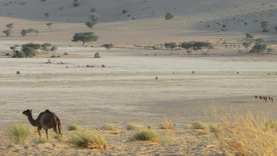 Common land resources are important to rural communities in much of Africa (Photo: Marie Monimart)