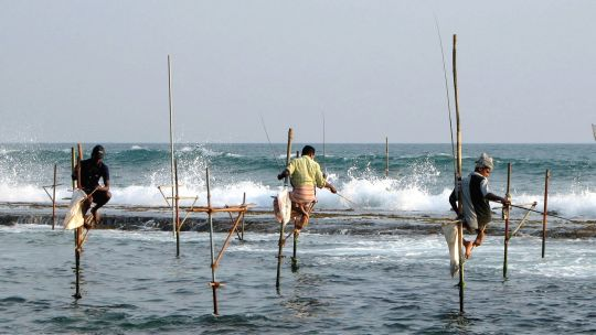 Stilt fishermen in Sri Lanka; in some countries small-scale fisheries provide nearly half the overall catch but their contribution often goes unrecognised (Photo: Benard Gagnon, Creative Commons via Wikipedia)