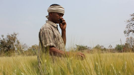 This farmer in India's Maharashtra state gets weather alerts, advisories about pests and market information via his mobile phone (Photo: Borlaug Institute for South Asia, Creative Commons via Flickr)