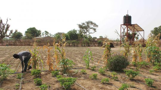 Drip irrigation in Faylar village, Senegal. Investing in solar-powered water pumps and drip-feed irrigation systems can help farmers survive in times of drought (Photo: InnoAfrica, Creative Commons via Wikimedia)
