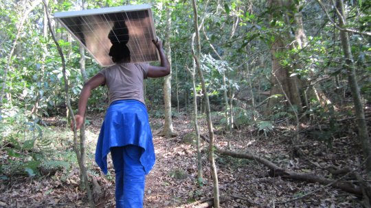 A woman in Malawi carries a solar panel above her head through a forest path
