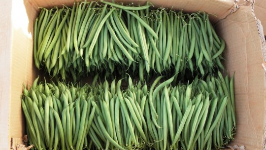 Green beans stacked into in a cardboard box