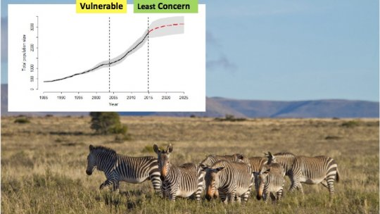 A presentation slide with a picture of zebras and a graph of their numbers