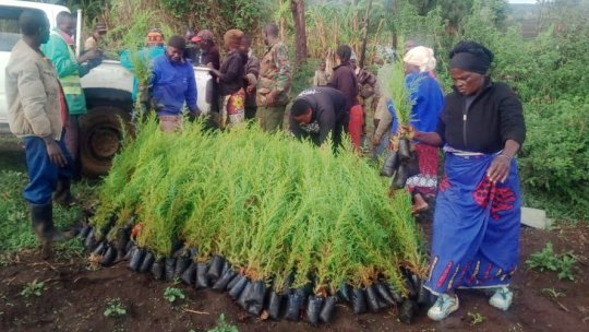 Community members unloading tree seedlings