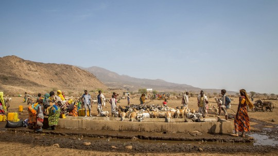 Groups of people and cattle taking and drinking water from a well