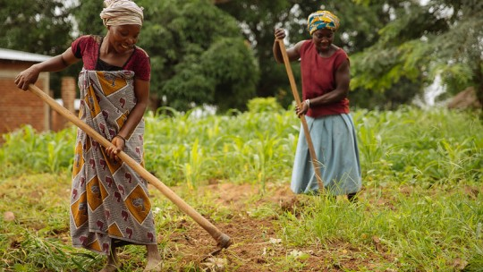 Two women using hoes in a crop field.