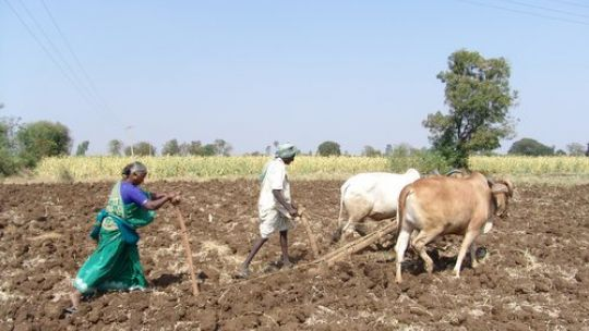 Ploughing with cattle in Andhra Pradesh, India. We worked with partners in India, Kenya and China to help forge a  new policy narrative for the drylands (Photo: Deccan Development Society)