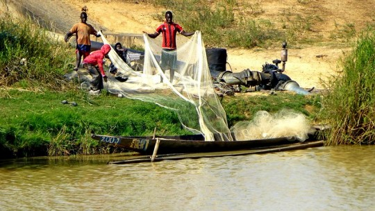 Fishermen dragging a net out of a river.