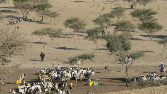 Pastoralists in Niger. Drylands are not deserts: they have ephemeral but resilient resources.  (Photo: Stephen Anderson/IIED)