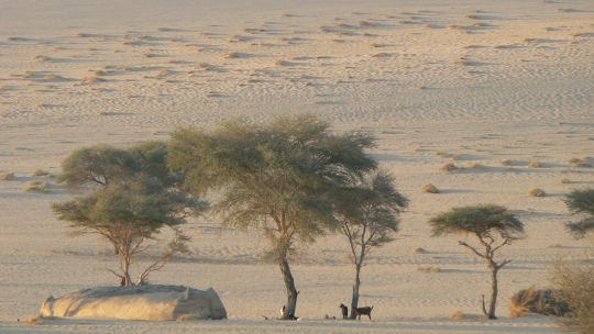 A pastoralist dwelling in Niger. Rural communities have learned to exploit the variability of dryland environments (Photo: IIED)