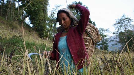 A traditional farmer in the Eastern Himalaya where indigenous communities use seed networks to protect their knowledge. Research should not publish details of traditional knowledge that could be used commercially without equitable benefit-sharing (Photo: Ruchi Pant/Ecoserve)